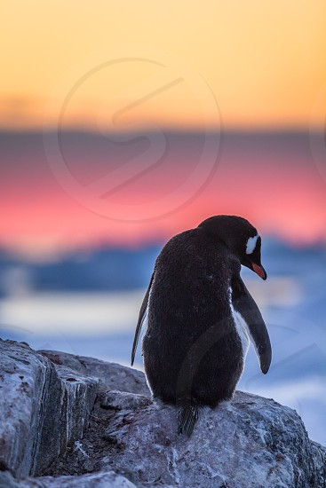 Impressions around the Antarctic Peninsula photo