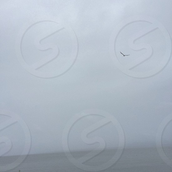 small bird flying over sea under white clouds photo