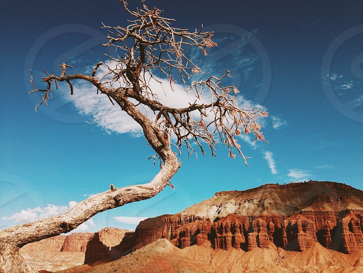 Story national park Utah tree cloud red photo