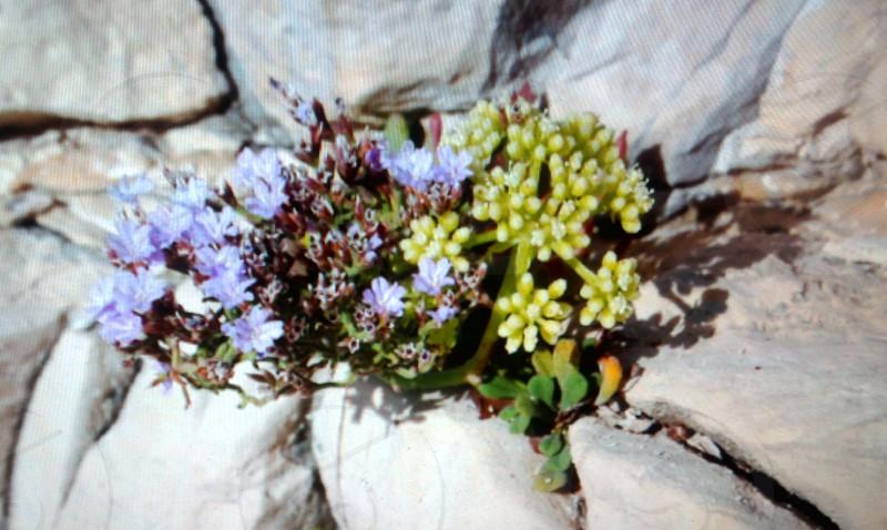 flower on rock photo