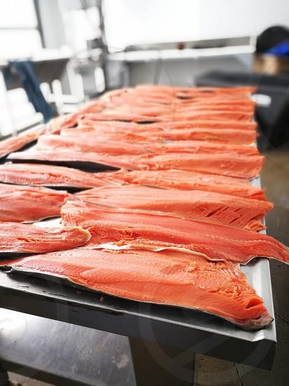 Salmon fillets for smoking on the farm photo