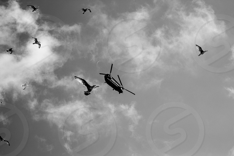 One of the flock - Eastborne Airshow photo
