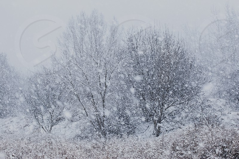 Meadow after heavy snowfall. Scenic wintery landscape of field of grass photo