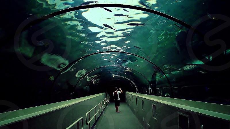 ocean tunnel view photo