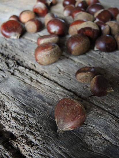 brown acorns photo