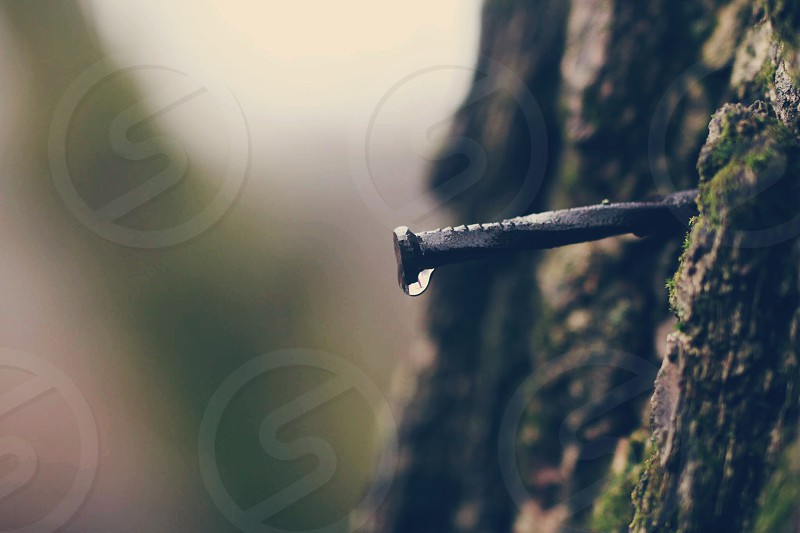 Nail tree water drop drip forest spring summer photo