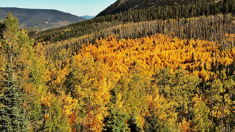 mountains with yellow and green trees photo