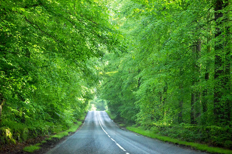 roadway with trees on side empty of passing vehicles photo