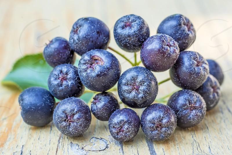 black choke berries photo
