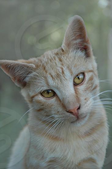 brown cat photo