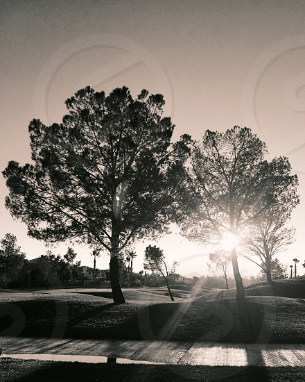 morning light sun trees morning sunflare sunshine two black and white warm photo