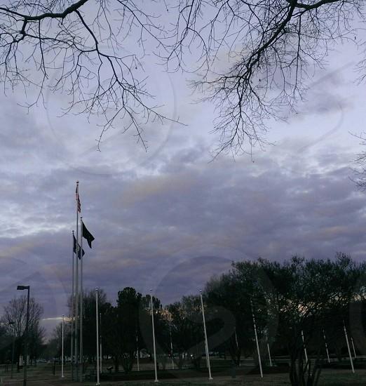 gray cloudy sky dark limbs three flags green trees photo