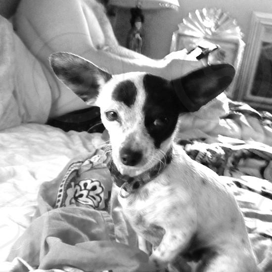 Bindi the wonder dog. photo