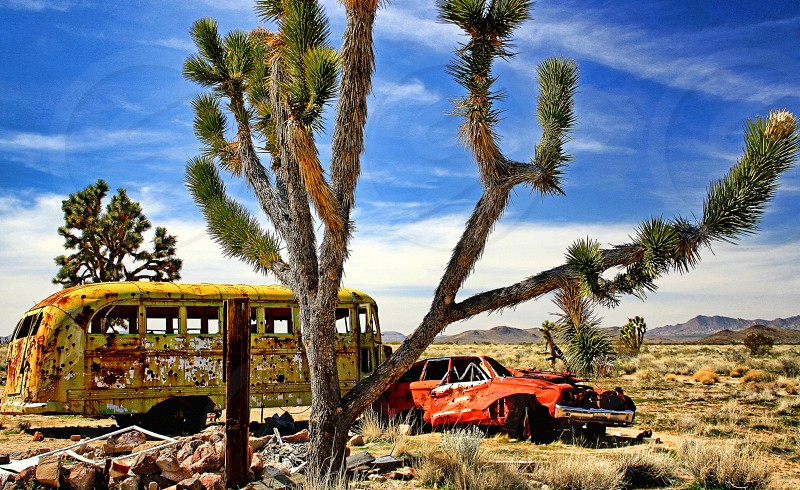 Abandoned school bus and car are in the desert behind a yucca tree. photo