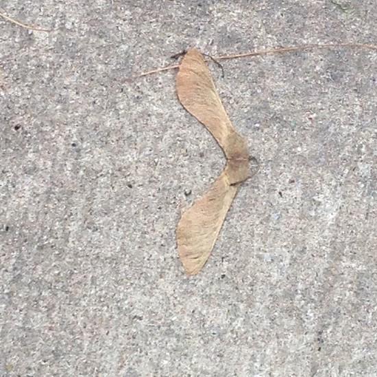 A FLYing leaf photo