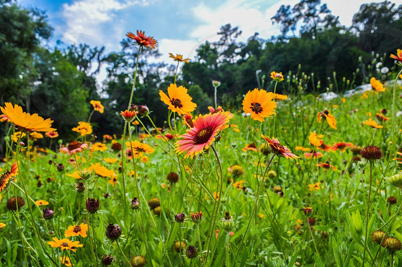 Natural;nature;flowers;sky;colors of life  photo