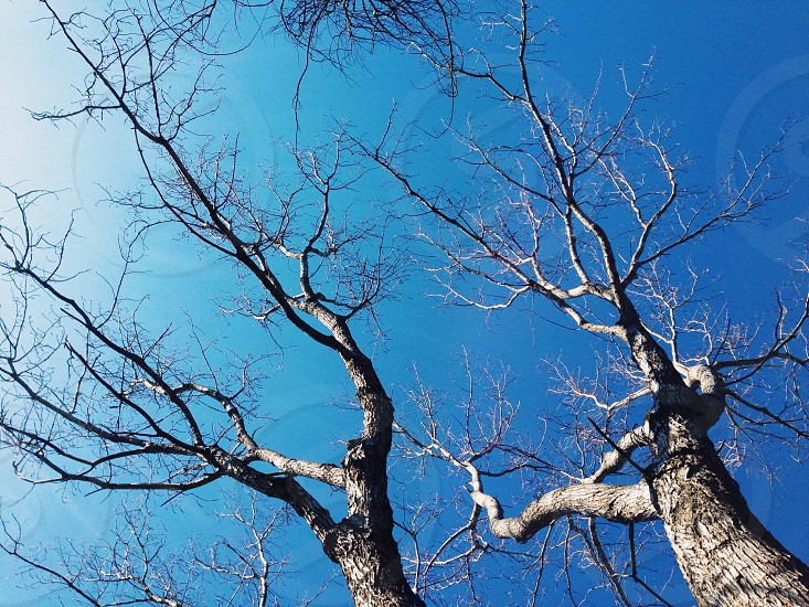 grey leafless outdoor tree photo