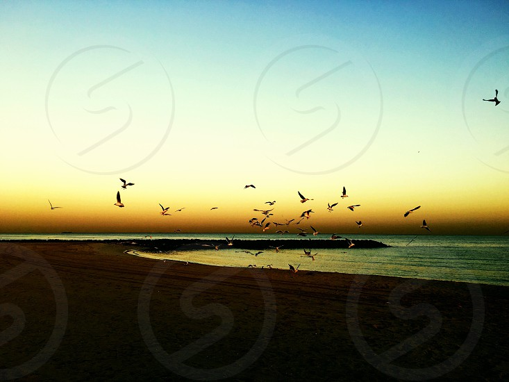 Kite beach at dawn Dubai UAE  photo