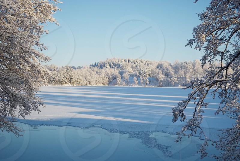 Wintery photo