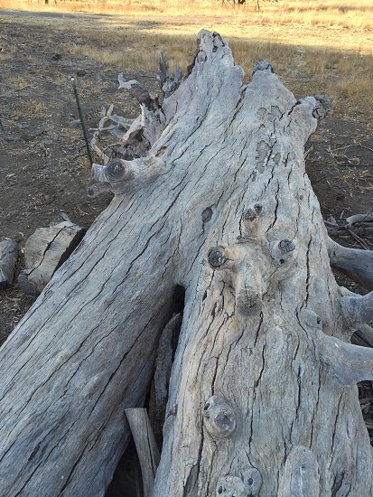 Dead tree nature wood photo
