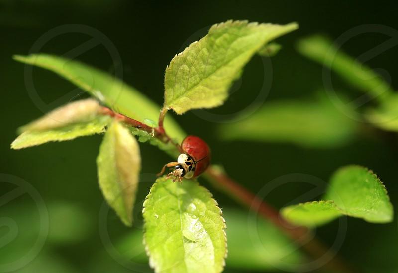 red ladybug sitting on tree photo
