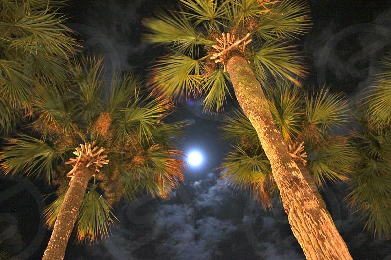 Full moon through palm trees. photo