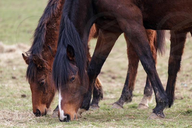 Two Racehorses Enjoying a Break from Racing photo