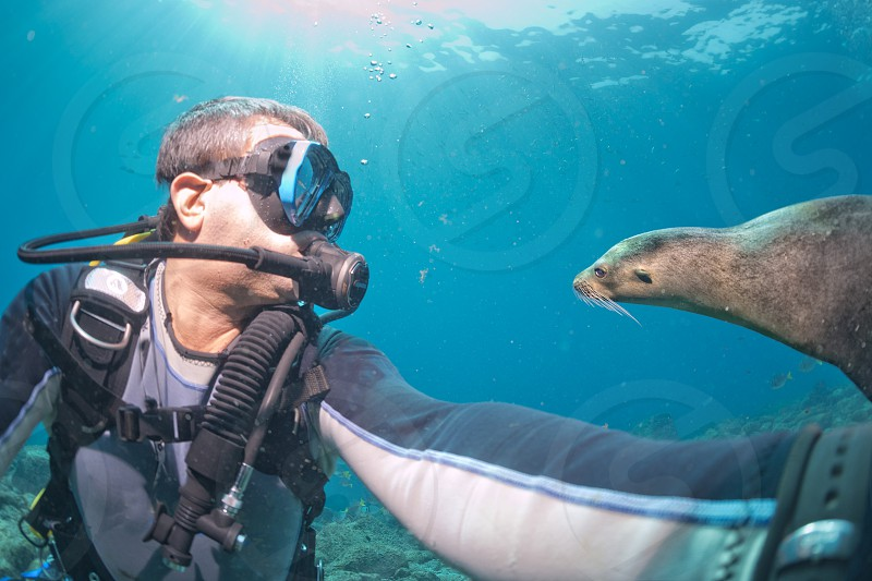 Diver taking a selfie underwater while a sea lion is approaching photo