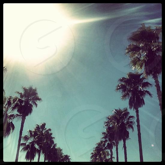 Palm Trees Sun photo