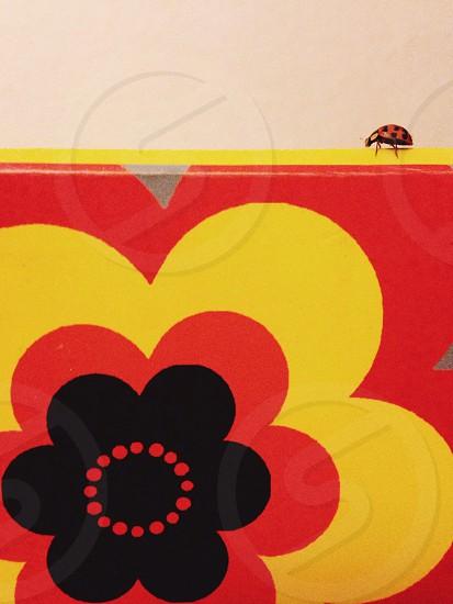 Ladybird flower dots colour  photo