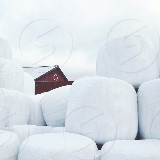 cylindrical white-packaged bales by dark red barn photo