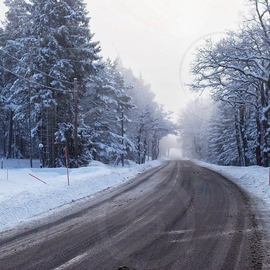 pine trees covered with snow beside gray pathway photo