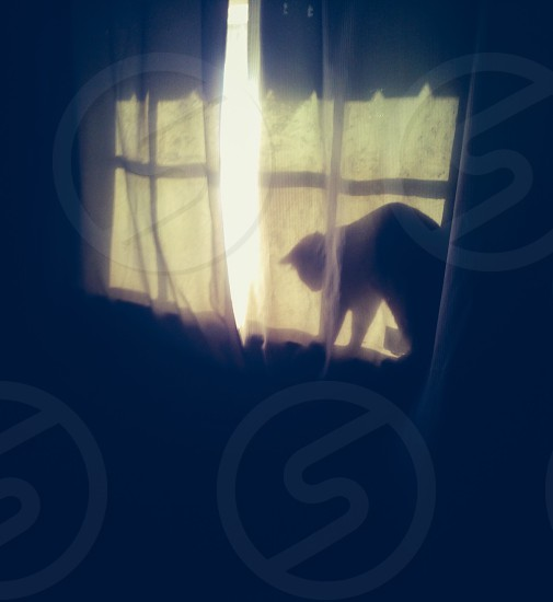 Cat playing in window photo