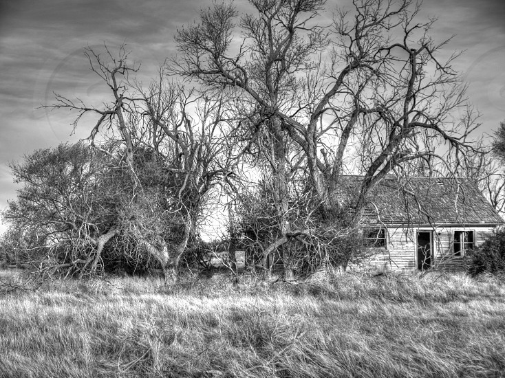 grayscale photo of leafless tree and grass in front of a house under cloudy sky photo