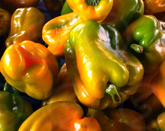 Harvest from garden colorful peppers photo