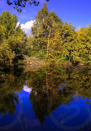 reflection nature lake mirror water tree colours natural light photo