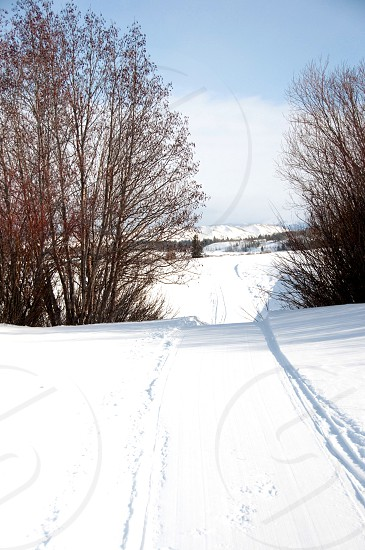 snowy trail with red trees photo