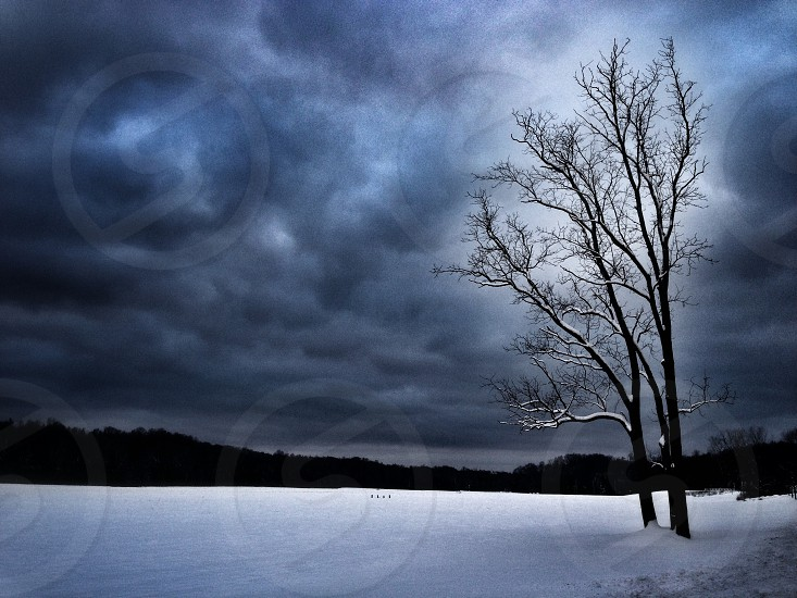 snow covered ground in storm photo