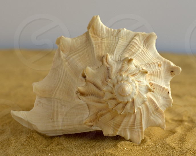 Seashell Spiral photo
