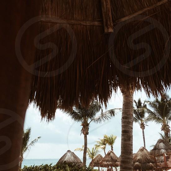 palm trees and nipa huts photo