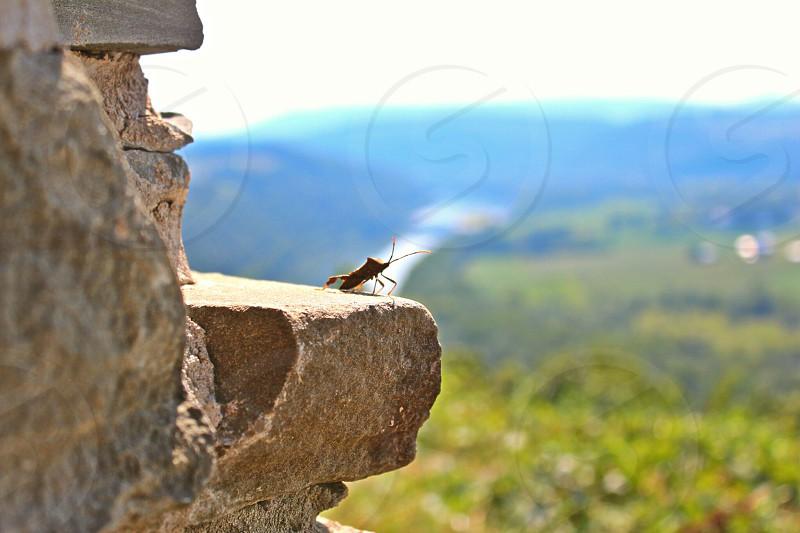 Living on the edge photo