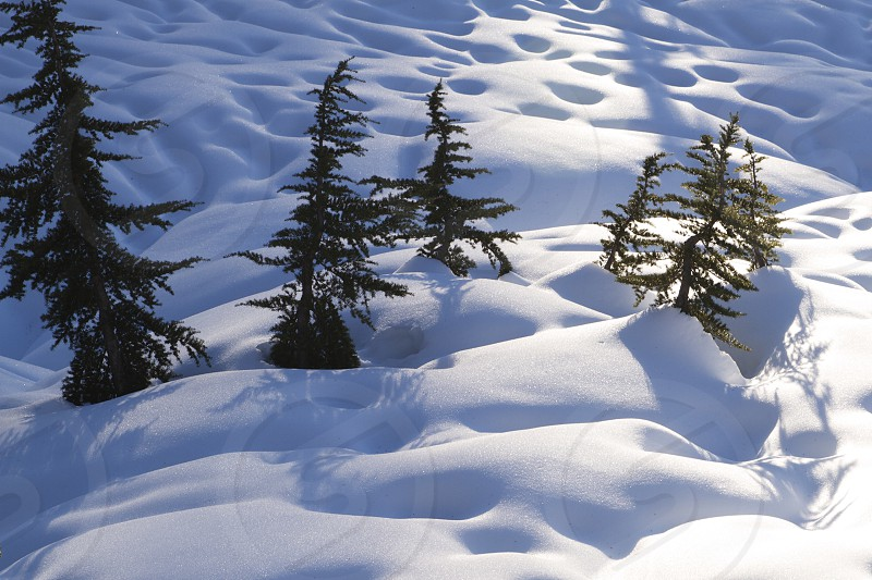 pine trees on snow covered slope photo