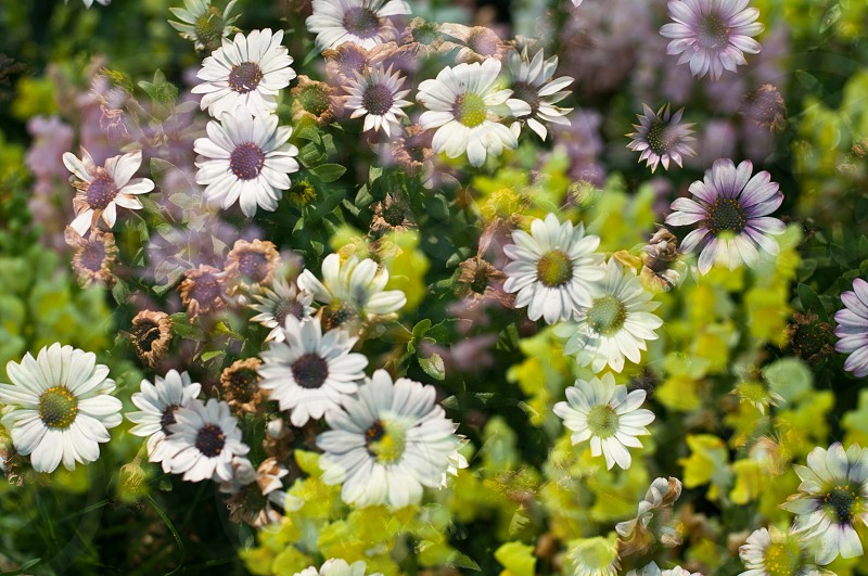 sunshine flower spring photo