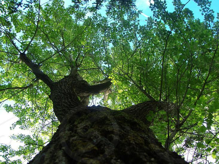 green leaf tree photo