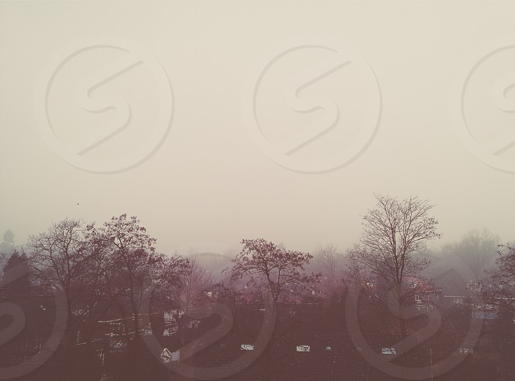 Netherlands Apeldoorn. My balcony view when foggy photo