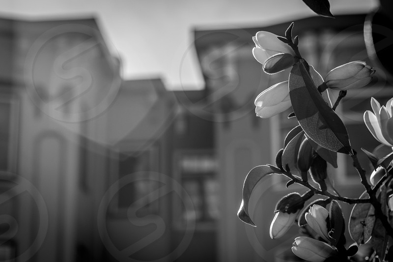 In love with Black and White flowers. photo