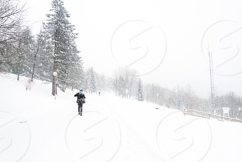 Snow winter forest cold snow storm storm Europe lake freeze freezing Croatia photo