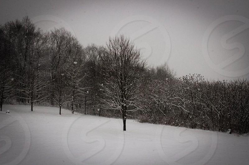 Winter wonderland in Central New York photo