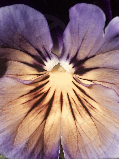 pale purple exotic flower close up photo