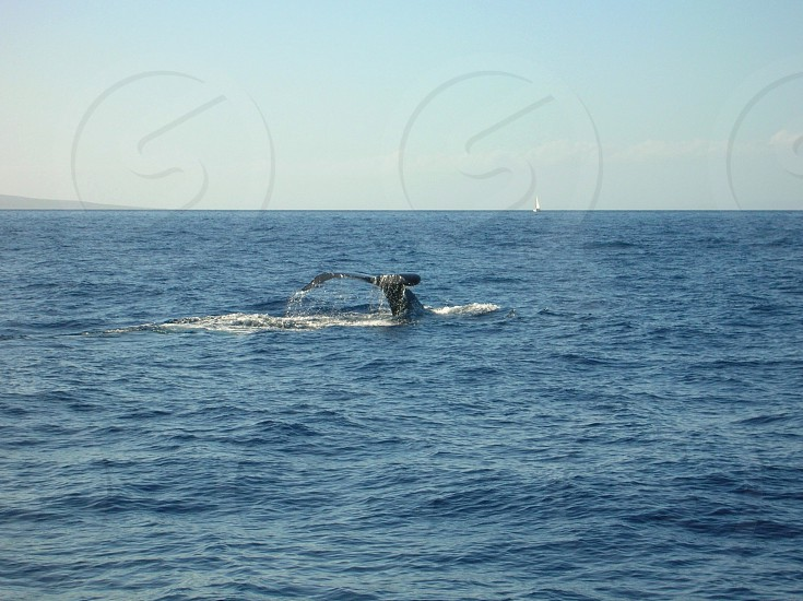 Whale watching Maui Island adventure  photo